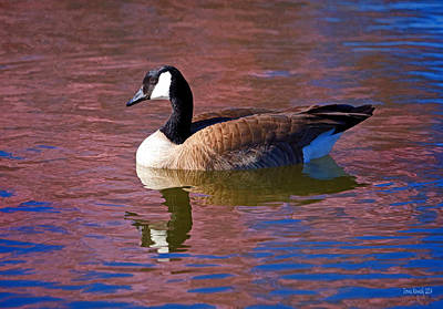 Geese Digital Art - That Touch Of Pink by Donna Kennedy