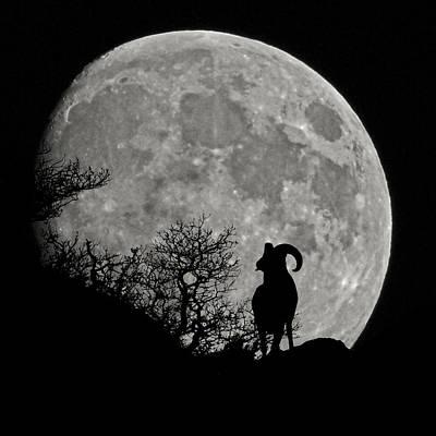 Photograph - The Big Horn by Ernie Echols