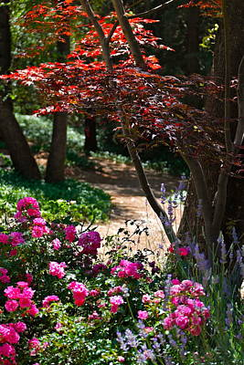 Photograph - The Garden Path by Michele Myers