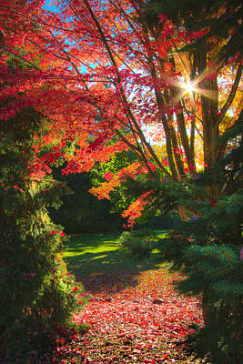 Fall Leaves Photograph - The Path by Phil Koch