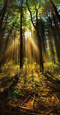 The Pines Art Print by Phil Koch