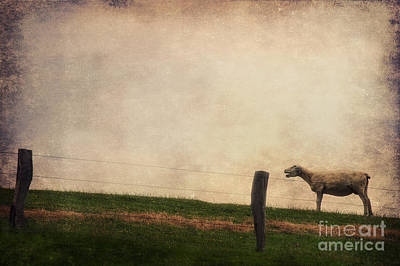 Sheep Portrait Photograph - The Sheep by Angela Doelling AD DESIGN Photo and PhotoArt