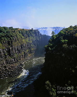 Moody Trees - The Victoria Falls by Alex Cassels