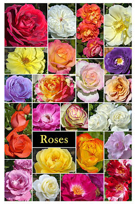 Art Print featuring the photograph The Wonderful World Of Roses by Cindy McDaniel