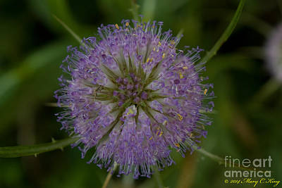 Mary King Photograph - Thistle Pop by Mary  King