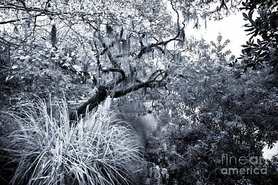 Photograph - Through The Trees by John Rizzuto