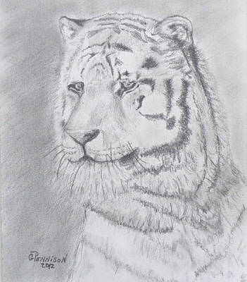 Animals Drawings - Tiger Watching by Gilbert Pennison