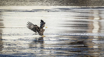 Tommytrout Photograph - Touching Down by Thomas Young