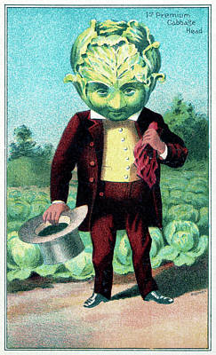 Cabbage Drawing - Trade Card, C1887 by Granger