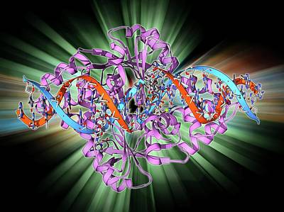 Rex Photograph - Transcription Repressor Protein And Dna by Laguna Design
