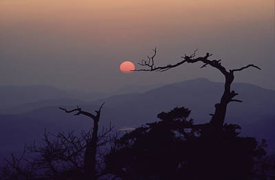 Tree And Sun From Mt Scott Art Print