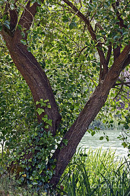 Art Print featuring the photograph Tree At Stow Lake by Kate Brown