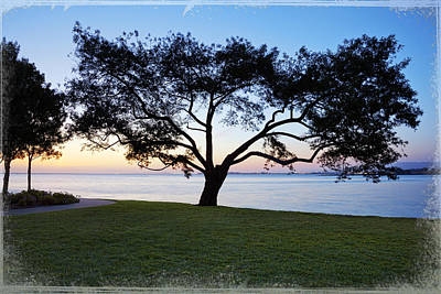 Tree By The Bay Art Print by Kelley King