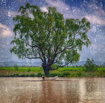 Photograph - Tree by Derek Selander