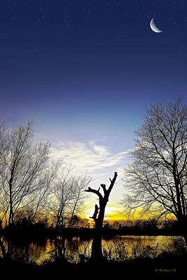 Hearns Pond Photograph - Tree Silhouette by Brian Wallace