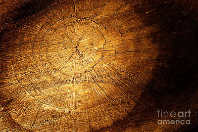Tree Texture Background Print by Mythja  Photography