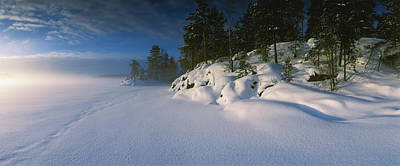 Cold Temperature Photograph - Trees Along A Frozen Lake, Saimaa by Panoramic Images