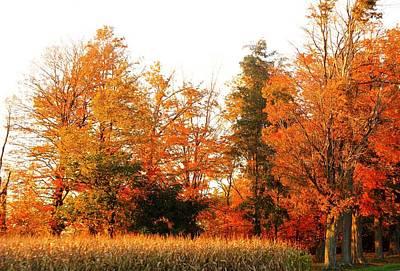 Photograph - Trees Of Fall by Rhonda Barrett