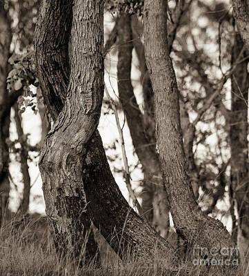 Photograph - Trees by Steven Ralser
