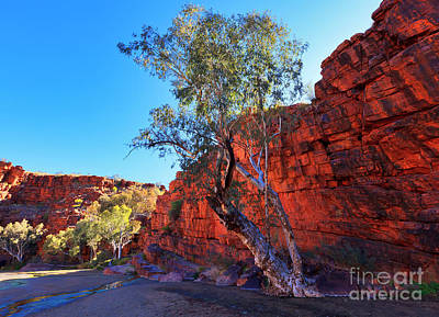 Northern Territory Photograph - Trephina Gorge by Bill  Robinson