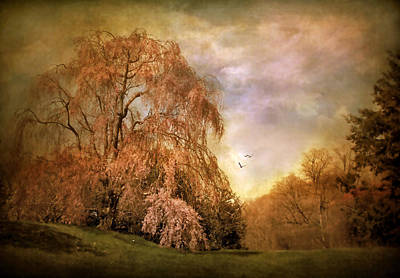 Weeping Cherry Photograph - Tristesse by Jessica Jenney