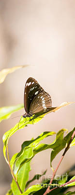 Fluttering Photograph - Tropical Butterfly by Jorgo Photography - Wall Art Gallery