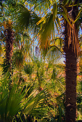 Photograph - Tropical Forest Palm Trees In Sunlight by Alex Grichenko