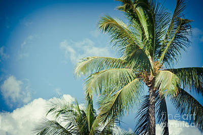 Photograph - Tropical Paradise by Sharon Mau
