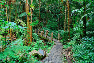 Photograph - Tropical Rain Forest In San Juan by Songquan Deng