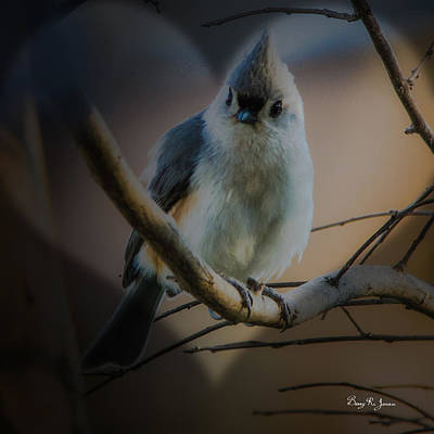Photograph - Tufted Titmouse by Barry Jones