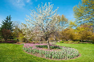 Tree Tulips Photograph - Tulips At Sherwood Gardens, Baltimore by Panoramic Images