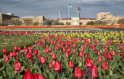 Tulips At Texas Tech University Art Print