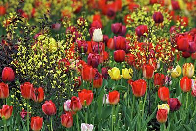 Audubon Park Photograph - Tulips, Audubon Neighborhood by Adam Jones