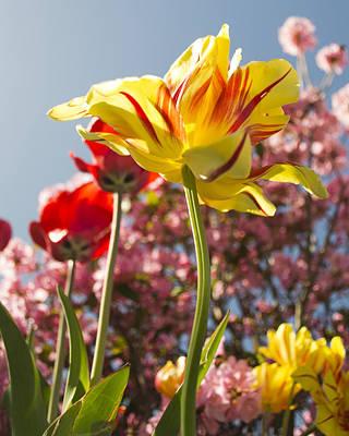 Photograph - Tulips by Jatinkumar Thakkar
