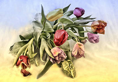Florales Photograph - Tulips by Manfred Lutzius