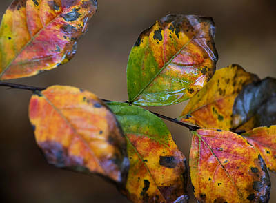 Photograph - Turning Leaves by Stephen Anderson
