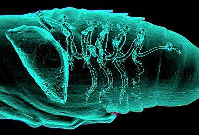 Compute Photograph - Tussock Moth Pupa by K H Fung