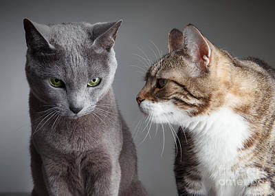 Pairs Photograph - Two Cats by Nailia Schwarz