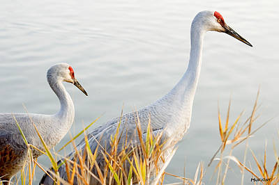 Photograph - Two Sandhill Cranes by Michele Wright