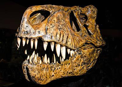 Photograph - Tyrannosaurus Rex Skull by Millard H. Sharp