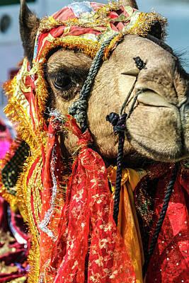 Diwali Photograph - Udaipur, Rajasthan, India by Jolly Sienda