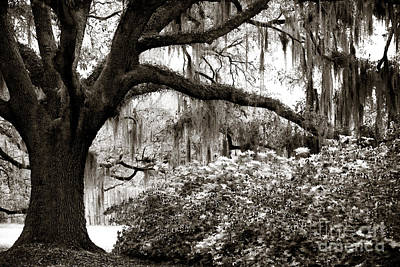 Photograph - Under The Moss by John Rizzuto