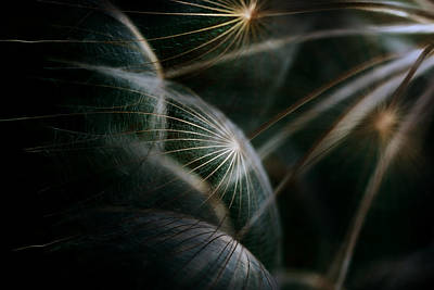 Dandelion Photograph - Untitled by Antonio Grambone