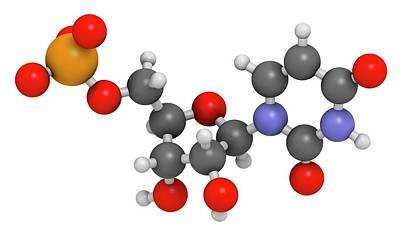 Uridine Monophosphate Nucleotide Molecule Art Print by Molekuul