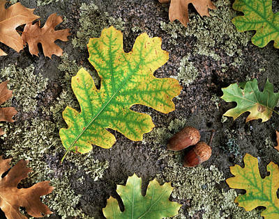 Forest Floor Photograph - Usa, California, Cleveland National by Christopher Talbot Frank