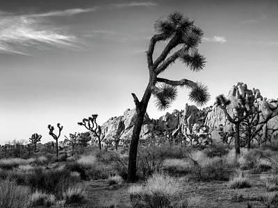 Trees Photograph - Usa, California, Joshua Tree National by Ann Collins