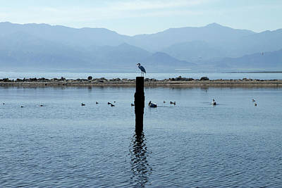 Genus Photograph - Usa, California, Salton Sea by Luc Novovitch