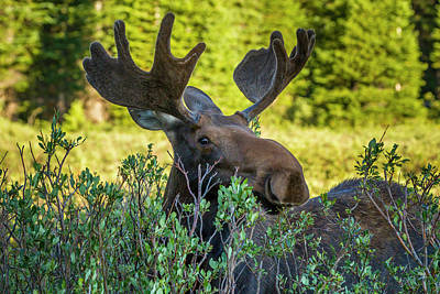 Rack Photograph - Usa, Colorado, Arapaho National Forest by Jaynes Gallery