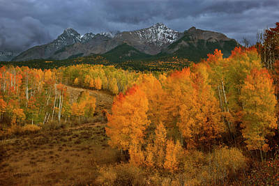 Stormy Tree Photograph - Usa, Colorado, Sneffels Range by Jaynes Gallery