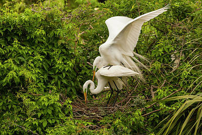 Great Egret Photograph - Usa, Florida, Anastasia Island by Jaynes Gallery